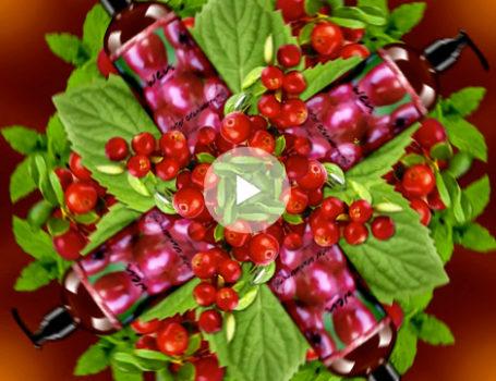 'Winter Cranberry Mint' Seasonal Campaign